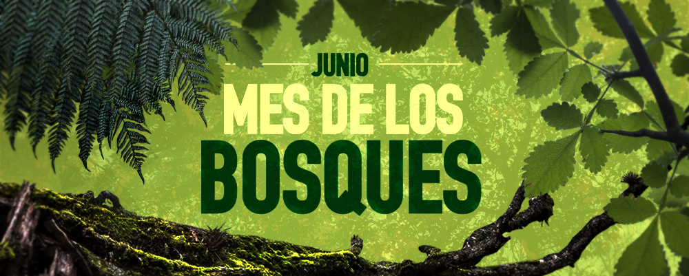 JUNIO BOSQUES home page EDITABLE
