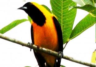 Worksheet. Descarga en tu celular los sonidos de la Biodiversidad colombiana